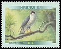 Cl: Northern Goshawk (Accipiter gentilis) <<Autour des palombes>>  SG 1865 (1999) 85