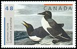 Cl: Common Murre (Uria aalge) <<Guillemot marmette>>  SG 2198 (2003) 85