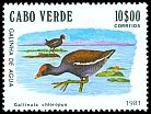 Cl: Common Moorhen (Gallinula chloropus) <<Galinha de Agua>>  SG 515 (1981) 230