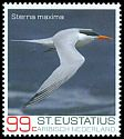 Cl: Royal Tern (Sterna maxima) new (2017)