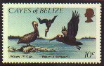 Cl: Brown Pelican (Pelecanus occidentalis)(not catalogued)  (1984) 0