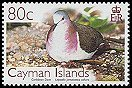 Cl: Caribbean Dove (Leptotila jamaicensis collaris)(Endemic or near-endemic)  SG 1111 (2006) 175