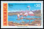 Cl: Chilean Flamingo (Phoenicopterus chilensis)(Endemic or near-endemic)  SG 1331 (1990)  [6/19]