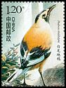 Cl: Xinjiang Ground-Jay (Podoces biddulphi)(Endemic or near-endemic)  SG 5252f (2008) 30