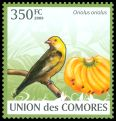 Cl: Eurasian Golden Oriole (Oriolus oriolus)(Repeat for this country)  new (2009)