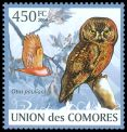 Cl: Comoro Scops-Owl (Otus pauliani) new (2009)