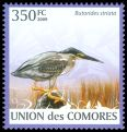 Cl: Striated Heron (Butorides striata) new (2009)