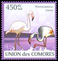 Cl: Greater Flamingo (Phoenicopterus roseus)(Repeat for this country)  new (2009)