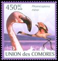Cl: Lesser Flamingo (Phoenicopterus minor) new (2009)