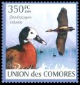 Cl: White-faced Whistling-Duck (Dendrocygna viduata)(Repeat for this country)  new (2009)