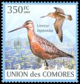 Cl: Bar-tailed Godwit (Limosa lapponica) new (2009)
