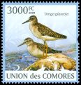 Cl: Wood Sandpiper (Tringa glareola) new (2009)