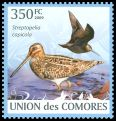 Cl: Pintail Snipe (Gallinago stenura) new (2009)