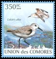 Cl: Sanderling (Calidris alba) new (2009)