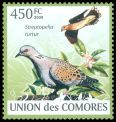 Cl: European Turtle-Dove (Streptopelia turtur) new (2009)