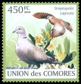 Cl: Ring-necked Dove (Streptopelia capicola) new (2009)