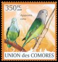 Cl: Grey-headed Lovebird (Agapornis canus)(Introduced)  new (2009)