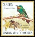 Cl: Blue-cheeked Bee-eater (Merops persicus) new (2009)