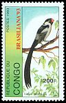 Cl: Pin-tailed Whydah (Vidua macroura)(not catalogued)  (1993)