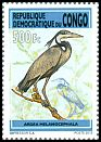 Cl: Black-headed Heron (Ardea melanocephala) new (2013)  [9/17]