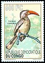 Cl: Red-billed Dwarf Hornbill (Tockus camurus) new (2012)