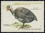 Cl: Helmeted Guineafowl (Numida meleagris galeata) <<Guinea>> (Introduced)  SG 1795 (1970) 90