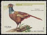 Cl: Ring-necked Pheasant (Phasianus colchicus torquatus) <<Faisan>> (Introduced)  SG 1797 (1970) 125