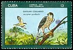 Cl: Gundlach's Hawk (Accipiter gundlachi) <<Gavilan Colilargo>> (Endemic or near-endemic)  SG 2305 (1976) 140