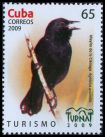 Cl: Red-shouldered Blackbird (Agelaius assimilis) <<Mayito de la Clenega>> (Endemic or near-endemic)  SG 5430 (2009)
