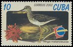 Cl: Greater Yellowlegs (Tringa melanoleuca) SG 4586 (2002)
