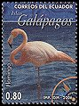 Cl: Caribbean Flamingo (Phoenicopterus ruber) <<Flamingo>> (Repeat for this country)  new (2006)  [4/7]
