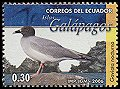 Cl: Swallow-tailed Gull (Creagrus furcatus) <<Gaviota nocturna>> (Endemic or near-endemic)  new (2006)  [4/7]