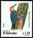 Cl: Golden-fronted Woodpecker (Melanerpes aurifrons) <<Cheje>>  SG 2497 (1999) 80