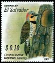 Cl: Northern Flicker (Colaptes auratus) SG 2802 (2007) 20