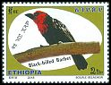 Cl: Black-billed Barbet (Lybius guifsobalito) new (2018)