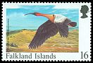 Cl: Buff-necked Ibis (Theristicus caudatus) SG 809 (1998) 30