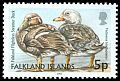 Cl: Falkland Steamerduck (Tachyeres brachypterus)(Endemic or near-endemic)  SG 956 (2003)  I have 1 spare [2/13]