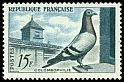 Cl: Rock Pigeon (Columba livia)(Domestic)  SG 1316 (1957) 25