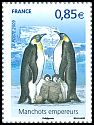 Cl: Emperor Penguin (Aptenodytes forsteri)(Out of range)  SG 4595b (2009) 325 [6/14]
