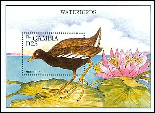 Cl: Common Moorhen (Gallinula chloropus) SG 1984b (1995) 550