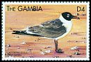 Cl: Laughing Gull (Larus atricilla) SG 3195 (1999)