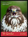 Cl: Eurasian Buzzard (Buteo buteo)(I do not have this stamp)  new (2018)