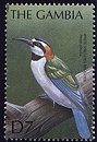 Cl: White-throated Bee-eater (Merops albicollis) SG 3749 (2000)