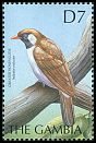 Cl: Greater Honeyguide (Indicator indicator) SG 3745 (2000)