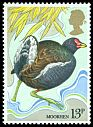 Cl: Common Moorhen (Gallinula chloropus) SG 1111 (1980) 50