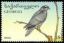 Cl: Northern Goshawk (Accipiter gentilis) SG 170 (1996) 60