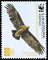 Cl: Greater Spotted Eagle (Aquila clanga) SG 509 (2007) 140