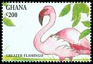 Cl: Greater Flamingo (Phoenicopterus roseus) SG 1994 (1994) 60
