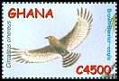 Cl: Brown Snake-Eagle (Circaetus cinereus) SG 3337b (2002) 150