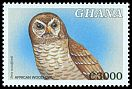Cl: African Wood-Owl (Strix woodfordii) SG 3014 (2000) 225